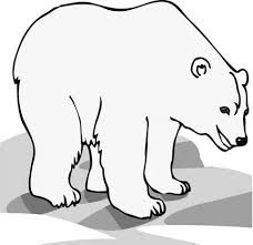 polar bear coloring pages young children love creative
