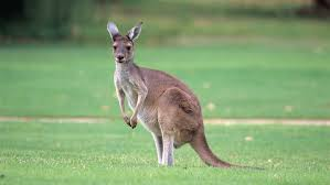 Imagenes Animales Australia | animales de australia