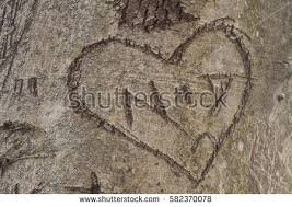 initials carved in tree heart initials carved into tree trunk stock photo 582370078