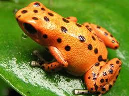 frog wallpaper 33 wujinshike com