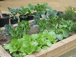winter vegetable garden gardening ideas