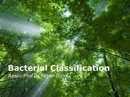 free templates for powerpoint bacteria bacterial classification ppt video online download