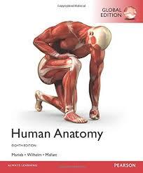 Human Anatomy And Physiology Marieb 7th Edition Human Anatomy 8th Edition Pdf Download For Free By Patricia