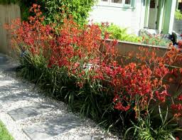 drought tolerant landscaping solutions a greener tomorrow inc