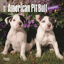 american pitbull terrier in uk american pit bull terrier puppies mini calendar 2018 calendar