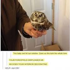 best 25 owl meme ideas on pinterest fun meme funny owls and
