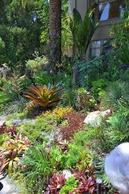 landscaping northern beaches 25 gorgeous tropical backyard landscaping ideas on pinterest
