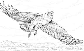 coloring pages bird free printable eagle coloring pages for kids
