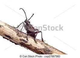 was ist das für ein insekt eine wanze oder was urlaub insekten insekt wanze raum sitzen freigestellt insekt branch