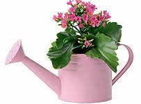 mothers day plants best and cheap offers for flowers for s day this is money