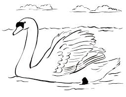 swan coloring pages swan swan swan coloring pages a beautiful