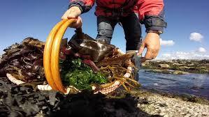 cours de cuisine cotes d armor détente origin algues sortie découverte et atelier cuisine aux