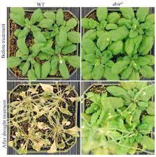 high heat plants rna discovery could help boost plant drought salt tolerance