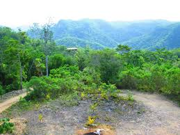mls in belize search property