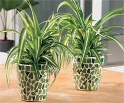 House Plants Diseases - the top 10 house plants for preventing diseases including cancer