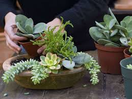 Low Light Succulents by Everything You Need To Know About Growing And Caring For