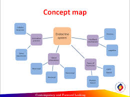 endocrine system concept map physiology part 3 reflection