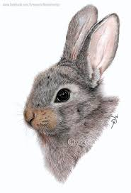 113 best colored pencil drawings images on pinterest colored