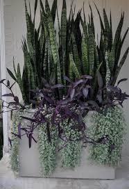 gardening 101 sansevieria gardenista sourcebook for outdoor