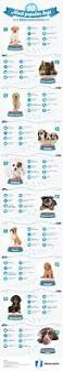 a breakdown of the 10 most popular dog breeds daily infographic