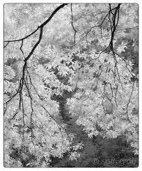 Lit Branches August 2017 Sam Gray Photo Blog