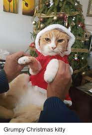 Cat Christmas Memes - christmas kitty meme mne vse pohuj