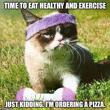 Funny Grumpy Cat Memes - 75 hilarious grumpy cat memes best cat memes love memes