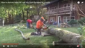 how to remove fallen 80 oak tree from backyard in 2 hours