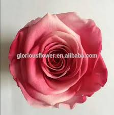 multicolor roses multicolor flower forever with wholesale price from