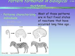 pattern formation zebra 1 80 self organization in natural systems mano jean pierre ppt