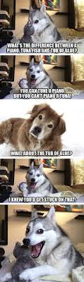 Pun Meme - the best worst jokes from pun husky
