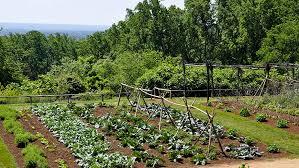 jc raulston arboretum gardening adventures with extension master