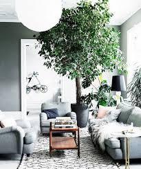 the best indoor trees www coolgarden me