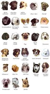 Types Of Dogs List Of Dog Breeds With Pictures Laura Williams