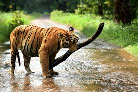 eastern ghats animals in eastern ghats face threat of extinction visakhapatnam