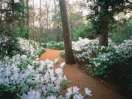 Photo Flower Garden by Bayou Bend Gardens The Museum Of Fine Arts Houston
