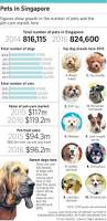 puppy love breeds more pet services singapore news u0026 top stories