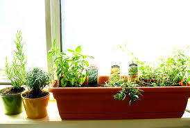 Window Sill Herb Garden Designs Captivating Window Sill Herb Garden Ideas With Windowsill Herb