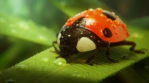 3d wallpaper for computer ladybug full hd quality images ladybug wallpaper for computer