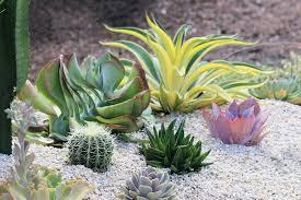 13 vacation proof houseplants hgtv