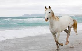 camargue white horse wallpapers horses wallpapers 1920x1200 hd wallpapers