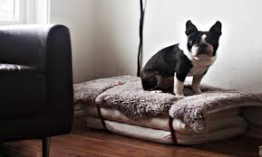 Comfortable Dog Diy Dog Bed Care2 Healthy Living