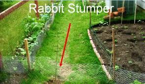 rabbit garden garden pest management how to build a rabbit proof fence and slug
