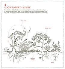 321 best permaculture images on pinterest forest garden