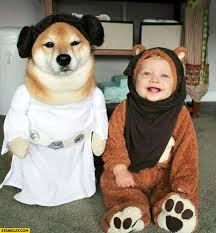 Doge Halloween Costume Pop Culture Halloween Couple Costumes Couple U0027s Costumes Ideas