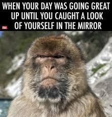 Animal Meme - we turned stunning wildlife photography into relatable memes for