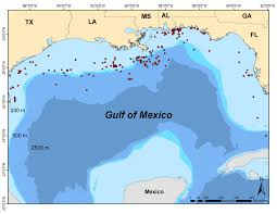 Map Of Gulf Of Mexico Whale Shark Distribution Maps Gulf Coast Research Laboratory
