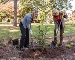 native north american plants north carolina u0027s governor and first lady put native plants in the