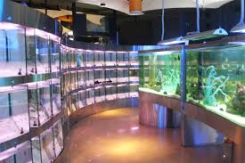 fish store design reef in alpharetta is a well