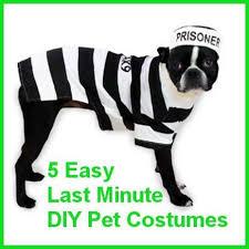 Human Dog Halloween Costumes 240 Cute Pet Costumes Images Animals Animal